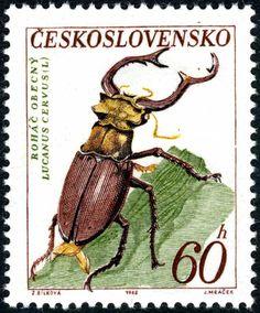 Czechoslovakia, 1962, Lucanus cervus
