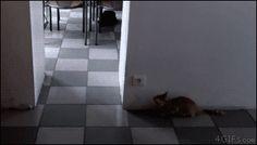 A cat outsmarts a stalking kitten