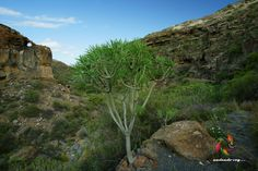 Barranco el Tajo #tenerifesenderos #senderismo #trekking #hiking #hike #sky #landscape #nature #outdoors
