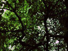 Tumblr Green Trees, Tumblr, Photography, Photograph, Fotografie, Photoshoot, Tumbler, Fotografia
