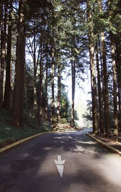 Trees in Portland Oregon. See more here! http://www.youtube.com/user/lovelyclusters/videos