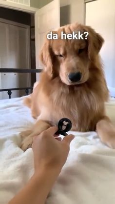Doggo hates snap snap (with sound) : Funny Dogs Funny Animal Jokes, Funny Dog Memes, Funny Dog Videos, Pet Videos, Jokes Videos, Videos Video, Meme Meme, 9gag Funny, Memes Humor