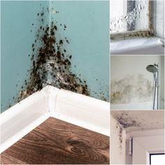 Shag Rug, Bath Mat, Rugs, Home Decor, Homes, Shaggy Rug, Farmhouse Rugs, Decoration Home, Room Decor