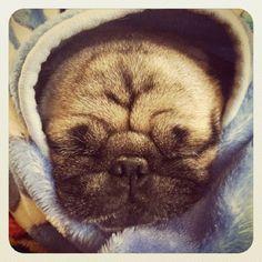 Bah Humpug!, pugsofinstagram: Thus is Nen! Please follow...