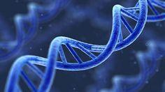 Est vez algo sorprendente, se descubren genes que intentan revivir a todo lo que muere.