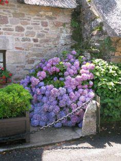 Hortensien vor einem Haus aus Naturstein