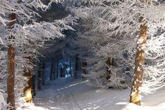 Snow Tree Tunnel, Czech Republic  photo from jchip
