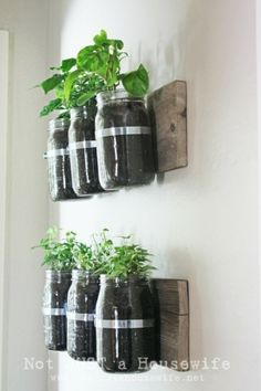 Mason jar wall planter - summer is just ending but i HAVE to do this next spring!