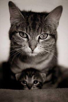 ma babee Veja aqui neste link >> http://www.universodegatos.com/gato/ ~ É verdade que por vezes pode dar um pouco de trabalho cuidar do seu #gato, quem tem um gato certamente sabe que muitas vezes vai trabalhar com cheiro a gato ou com a roupa cheia de pêlo, mas nada supera a amizade com gato!