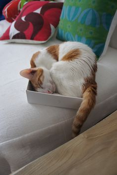 Cats in Boxes | cat + box = happiness | Page 2