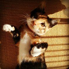 Kotełka
