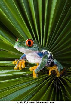 CUTE Frog!