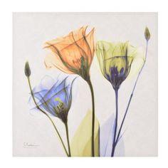 Colorful X-ray Floral Canvas Art Print | Kirklands