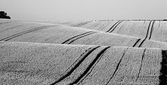 Wheat Fields 1 by phil_howcroft