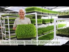 How To Grow The Best Wheatgrass | Hippocrates Health Institute Video