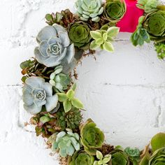 How to Make a Succulent Wreath You Can Hang All Year Round | Brit + Co
