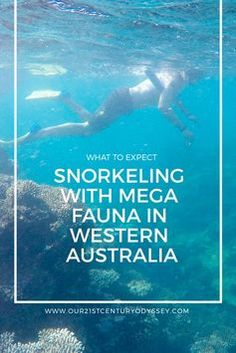 Snorkeling with Mega Fauna in Australia - Our 21st Century Odyssey