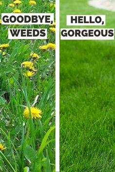 Yard Hack: Tips and tricks to saying goodbye to weeds