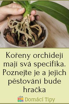Korn, Green Beans, Beef, Vegetables, Garden, Meat, Garten, Lawn And Garden, Vegetable Recipes