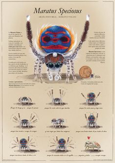 Spider Drawing, Spider Art, Unusual Animals, Cute Animals, Insect Anatomy, Lucas The Spider, Anime Character Drawing, Jumping Spider, Beautiful Bugs
