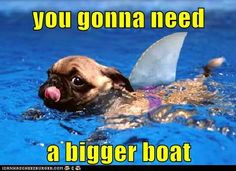 would you like to see this in the pool aka shark-pug pug pug Myers Grimes. would you like to see this in the pool aka shark-pug? Cute Pugs, Cute Puppies, Dogs And Puppies, Doggies, Baby Animals, Funny Animals, Cute Animals, Animal Memes, Pug Love