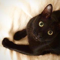 黒猫チェブラーシカ