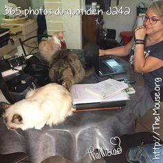 Je blogue avec mes minettes: Minnie Jerry et Prada! #365virginieb2 #jerry #jerrysuperstar #minnie #prada #themouse #plaisirdesyeux #viedechat #cat #Love #Instagood #Me #Cute #Follow #Like #Photoofteday #followme #Girl #Happy #Beautiful #Selfie #Picoftheday #Fun #Smile #Friends #Instadaily #Igers #Fashion #Instalike #hblegang http://themouse.org