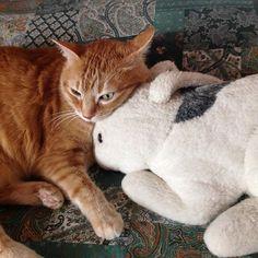 A-mici... my shot  #ig #igers #igdaily #igaddict #igcats #instagood #instadaily #instacat #gatto #cat #igerslivorno #igertuscany #pelouche #animal #animals #animali #amici #amicizia #friends #friendship #instafollow #instafun #instafunny