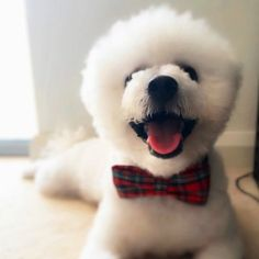 Meet Souffle the PuppyGoGo.com Pup of the Month for July 2016!