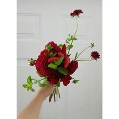 ampersand flowers
