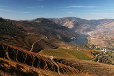 Visiter Porto côté nature - via Les Globe Blogueurs 25.06.2015 | Dans les parcs, les jardins, sur les rives du Douro, dans le creux des trottoirs, les terrains vagues, à Porto, elle prend la place qu'on lui donne, mais sait aussi reprendre ses droits, pour peu qu'on cesse de lutter contre elle. #porto #portugal #voyage #nature #travel #tips Photo: Vallée douro portugal