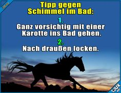 Schimmel Badezimmer Schimmelentfernen Funny Horses, Funny Animals, Haha, Horse Quotes, Funny Pins, Beautiful Horses, Make Me Smile, I Laughed, Fun Facts