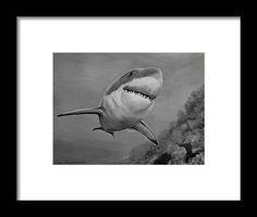 Shark Framed Print featuring the drawing Reef Shark by Faye Anastasopoulou White Bison, Reef Shark, Hope Symbol, Native American History, Frame Shop, Great Photos, Framed Art Prints, Fine Art America, Original Art