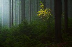 fogspot   Flickr - Photo Sharing!