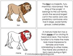 Lion Nomenclature Book (in red): illustrates and describes 13 parts of the Lion