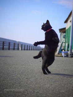 アクセント 「のら猫拳」発売開始!(@sakata_77)さん | Twitter