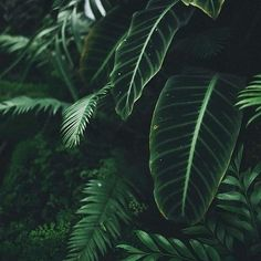 Welcome to the jungle nature aesthetic, dark green aesthetic, aesthetic plants, jungle flowers Dark Green Aesthetic, Plant Aesthetic, Nature Aesthetic, Travel Aesthetic, Plants Are Friends, Slytherin Aesthetic, Welcome To The Jungle, Photo Instagram, Disney Instagram
