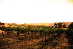 Vintage Cowboy Winery Vineyard