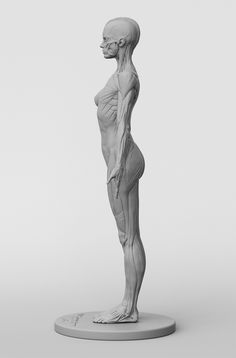 Anatomy study, anatomy drawing, anatomy models, anatomy for artists, figure Human Figure Drawing, Figure Drawing Reference, Art Reference Poses, Anatomy Reference, Anatomy Models, Anatomy For Artists, Human Anatomy Drawing, Human Anatomy Female, Anatomy Sculpture
