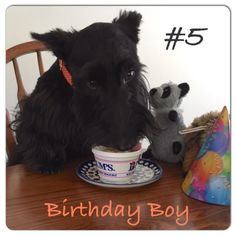 Funny Dogs, Cute Dogs, Dog Training Classes, Terrier Dogs, New Puppy, Dog Quotes, Westies, Boy Birthday, Squirrel