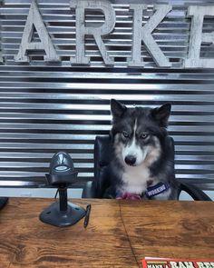Canine Friendly Bark Notes Patch for Collar or Leash Pet Supplies, Your Dog, Husky, Corgi, Boss, Patches, Animals, Animais, Corgis