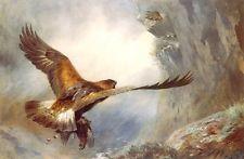 ARCHIBALD THORBURN - A GOLDEN EAGLE RETURNING -  PRINT