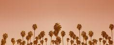 Palmen – Kupfer ist einer der besten Wärmeleiter die es gibt. Der Schimmer wenn Sonnenlicht auf ein Kupferstück fällt ist einzigartig und wird seid Jahrhunderten in der Alchemie verehrt. Man kann förmlich, die Wärme, die Sonne und die leichte Brise in diesem Bild fühlen. Ein Glanz der nie vergeht und den ganzen Raum in eine besondere Stimmung versetzt. 2015, PP   © www.piqt.de   #PIQT