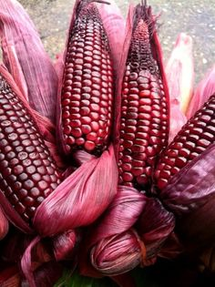 Blushing corn IN THE PINK Pink love, Everything pink, Color pink color on corn - Pink Things Pink Love, Red And Pink, Pretty In Pink, Hot Pink, Fruit And Veg, Fruits And Veggies, Red Vegetables, Marsala, Colored Corn