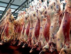 Pregon Agropecuario :: LOS PRECIOS INTERNACIONALES DE LA CARNE RESISTEN - Ganadería Bovina - Carne