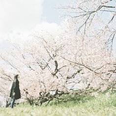 Cherry blossoms, cherry blossoms, Across the spring sky, As far as you can see. Is it a mist, or clouds? Fragrant in the air. Almond Blossom, Wild Hearts, Just Amazing, Beautiful World, Daydream, Memorial Day, Spring Time, Mists, Natural Beauty