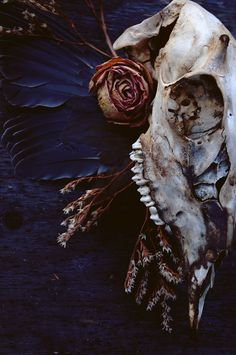 Blood, guts and chocolate cake bones in 2019 skull art, skul The Ancient Magus Bride, Witch Aesthetic, Hades Aesthetic, Blue Aesthetic, Animal Bones, Necromancer, Wow Art, Vulture, Vanitas