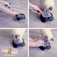 Our lovely cat can't wait to test the bowl holders, do you want to see how it continues? #ProductDesign #Design #Cats #Kitty #Katze #Katzenfutter #Catfood  #ProduktDesign #SnapFeed