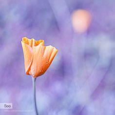 Pastel by Nrvi