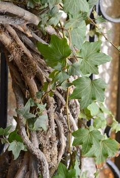Houseplants for Better Sleep Willow and Ivy Wreath Detail Inside Plants, Colorful Garden, Ficus, How To Make Wreaths, Green And Brown, Houseplants, The Great Outdoors, Wild Flowers, Greenery